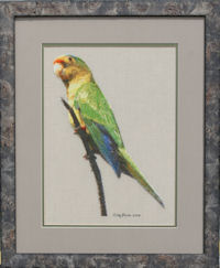 Orange Fronted Parakeet Pattern (L9-001)
