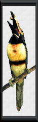 Collared Aracari Pattern (L9-005)